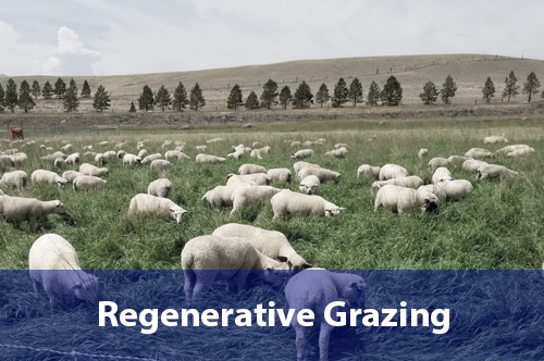 regenerative-grazing