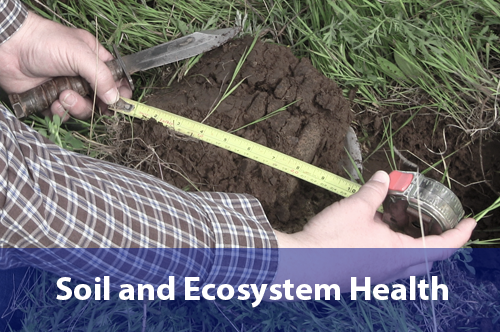 soil-and-ecosystem-health