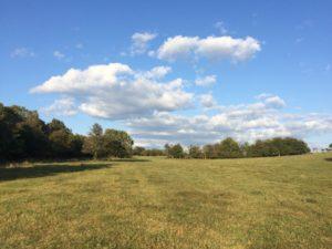 open field with blue sky