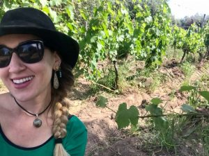 Taking petiole samples in a vineyard agroforestry system in Mendoza, Argentina,
